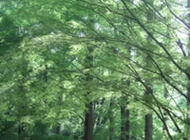 自然の木の調質効果